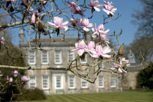 Magnolia at Trewithen Gardens