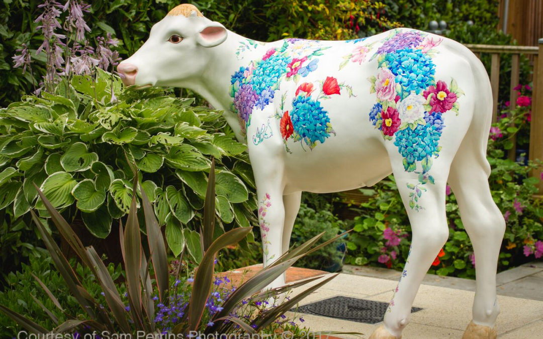 Hydrangea the calf is born